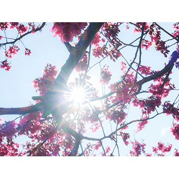 【延期】ユカイハンズ 企画展 #009 春の写真グループ展「Bloomin'!」